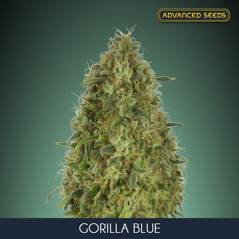 AQUA FLORES A+B 5 L