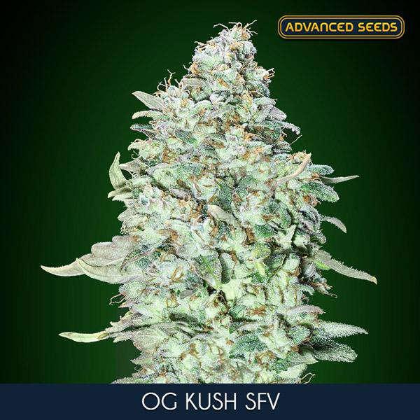 EXTRACTOR CENTRO BLAUBERG 315 mm (1700 m3/h) (53 db)