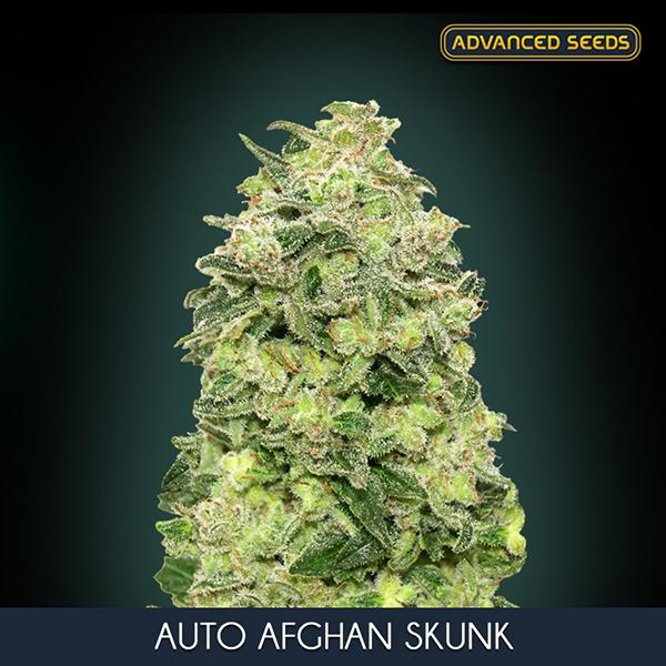 FILTRO CAN-LITE 125 mm (300 m3/h)