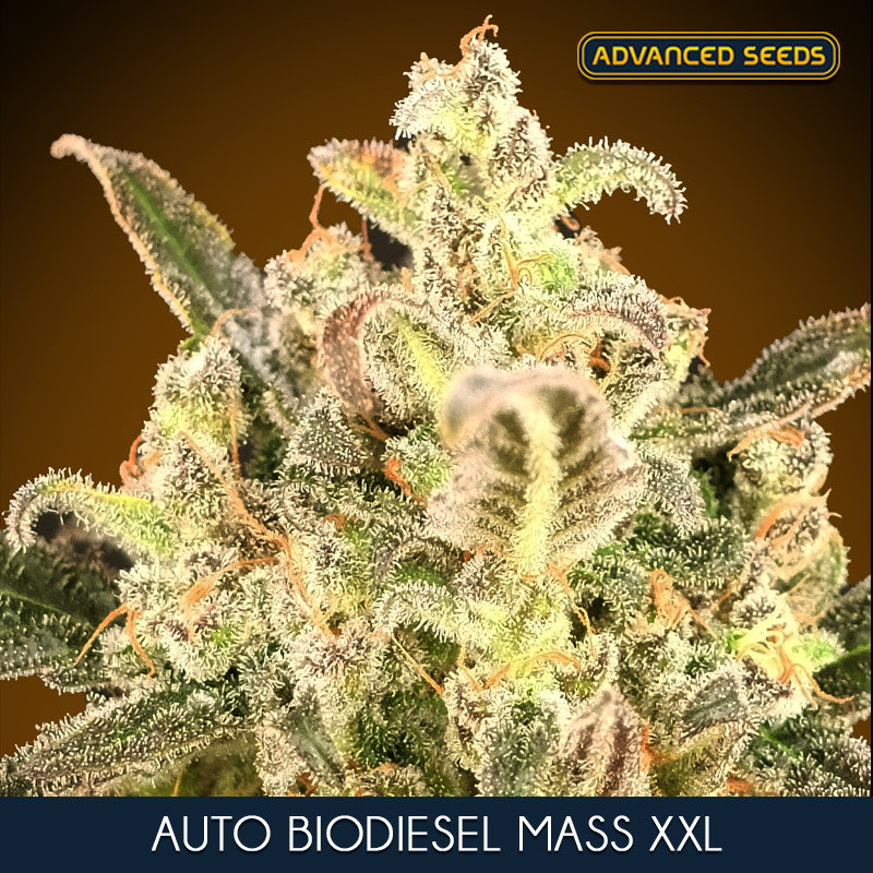 CALCIUM MAGNESIUM 10 L