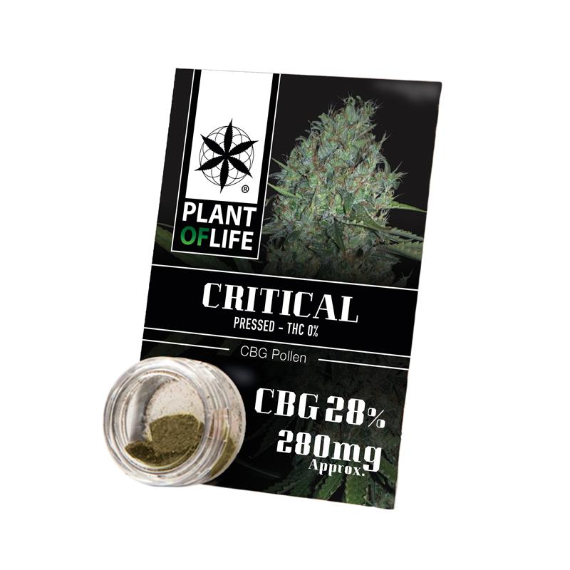 AUTO AMNESIA XXL (3+1)) AS