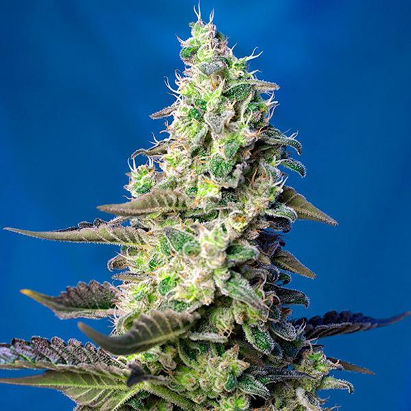 CORONA PLASTICO 125 mm